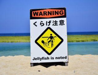【安全情報】クラゲに注意!